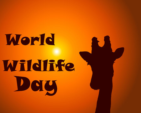 World wildlife day text with giraffe silhouette on sunset background . Vector illustration for poster, banner, card, prints Vektorové ilustrace