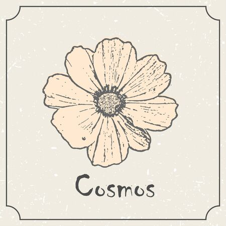 Cosmos flower. Vintage grunge marriage design template, floral artwork. Vector illustration of summer concept for invitation, card, ticket, logo, label