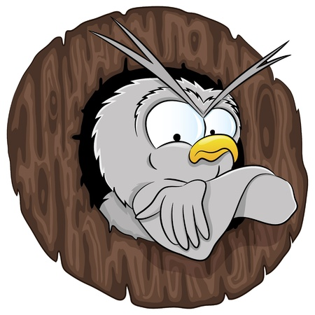 Vector  Cartoon owl  Vector