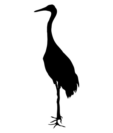Crane bird on the white