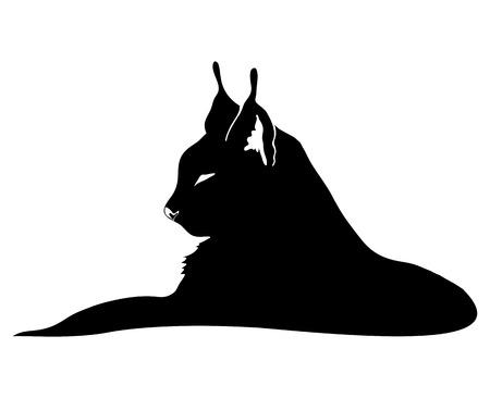 lince: Lynx gato en blanco