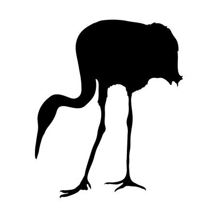 egret: Crane bird on the white