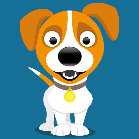 jack russell: Jack russell terrier