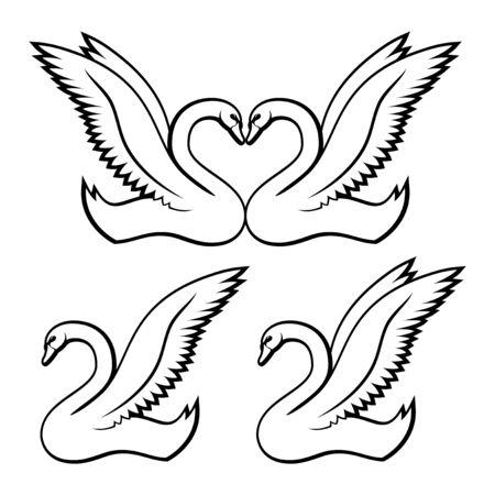swans: Swans. Illustration