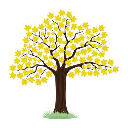 maple tree: Maple tree. Illustration