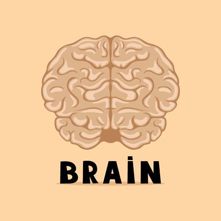 베이지 색 배경에 두뇌입니다.