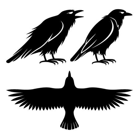 Raven signs. Illusztráció