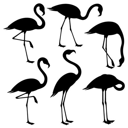 Set of black flamingos on white background. Vettoriali
