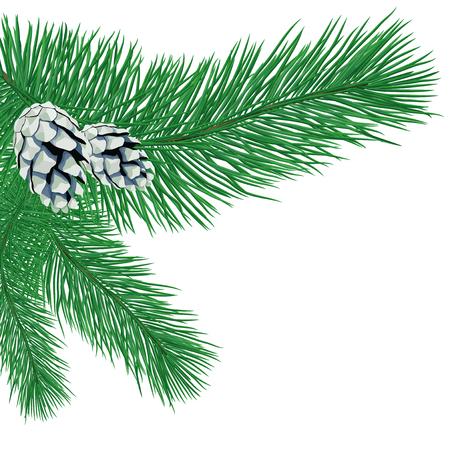 Branche de pin avec des cônes.