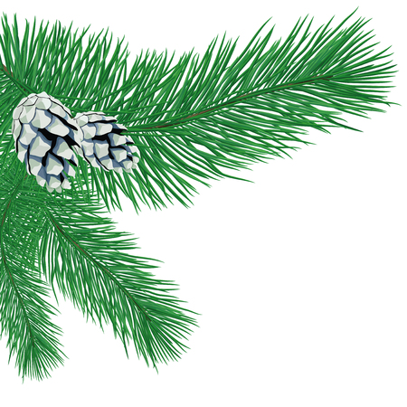 Pine branch with cones.