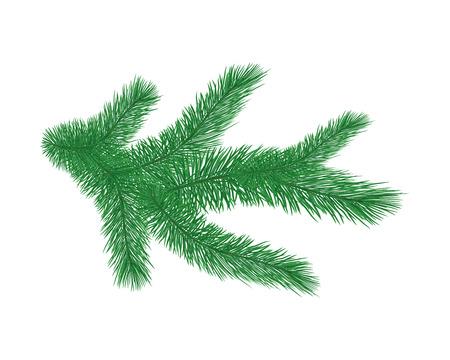 Green spruce branch. Vetores