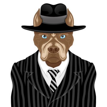 Dog breed pit bull terrier in suit of the gangster.