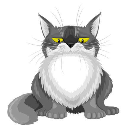 Cute gray fluffy cat on white background.