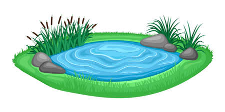 Illustration with beautiful pond and reeds on white background.