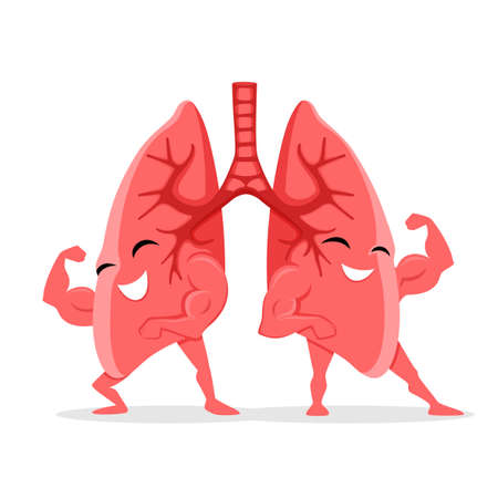 Healthy and strong lungs on white background.
