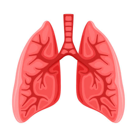 Human healthy lungs icon on white background. Иллюстрация