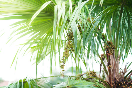 Palm leaves and white background isolated.
