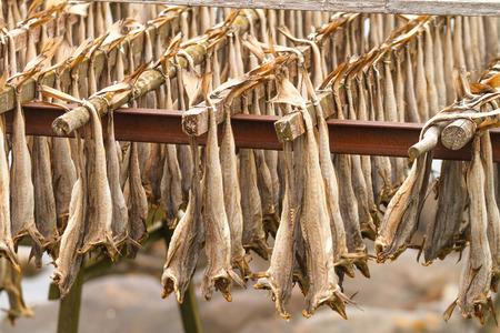 stockfish: Norway, dried cod, stockfish