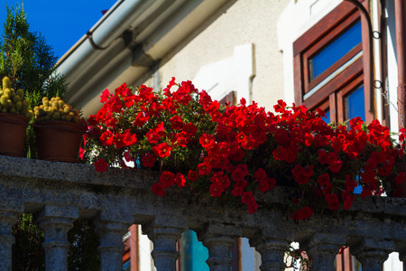 porch scene: Red petunia with small flowers on a balcony ballustrade.