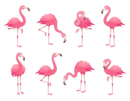 Aves exóticas flamencos rosados. Flamingo con plumas de rosas se para sobre una pierna en la fauna salvaje africana. Pluma de zoológico plumaje rosado lindo pájaro flam dibujos animados vector aislado conjunto ilustración
