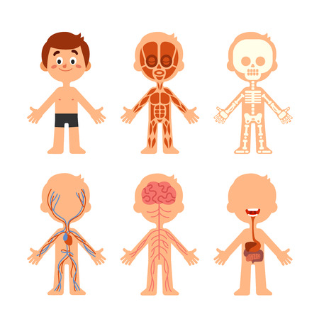 Cartoon boy body anatomy. Human biology systems anatomical chart icon. Skeleton, veins system and muscle brain organs physiology medicine healthcare colorful vector isolated symbol illustration set