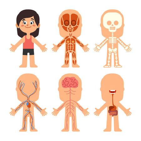 Cartoon girl body anatomy. Woman brain veins, organs liver and nervous system biology chart. Human skeleton and muscle systems education science medical physiology vector isolated symbol illustration
