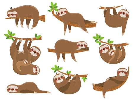 Cartoon sloths family. Adorable sloth sleepy animal at jungle rainforest different lazy sleeping. Funny brown cute animals happy sleep on tropical forest trees vector icons isolated set Imagens - 114949039