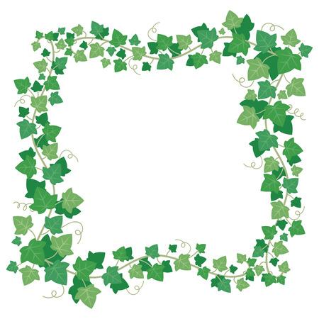 Vine ivy green leaves frame. Climbing plant lush greenery rectangular vine border creepers. Floral creeper leaf green liana garden isolated vector illustration Banco de Imagens - 104850257