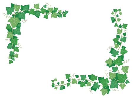 Foglie verdi di edera sugli angoli del telaio. Piante decorative dell'uva che appendono la pianta della vite dell'uva sulla parete del giardino. Cornici floreali liana decorazione vettore illustrazione isolato sfondo