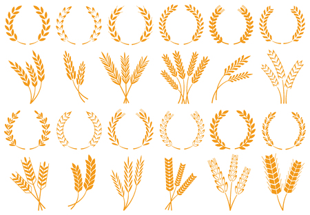 Wheat or barley ears. Harvest wheat grain, growth rice stalk and whole bread grains or field cereal nutritious rye grained agriculture products ear symbol. Isolated vector icons set Stock Photo