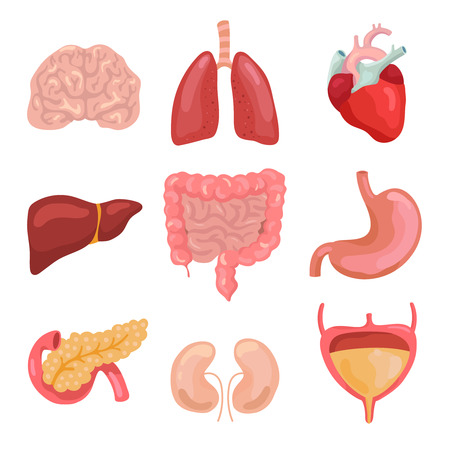 Organi del corpo umano del fumetto. Digestivo sano, circolatorio. Icone di anatomia dell'organo per grafico medico, sistema gastrointestinale, cervello del cuore dell'intestino e cistifellea. Set di icone isolate vettore di medicina