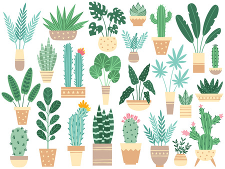 Home plants in pots. Nature houseplants, decoration potted houseplant and flower plant planting in pot or garden decorative flowerpot. Succulent, monstera ficus vector isolated icons illustration set