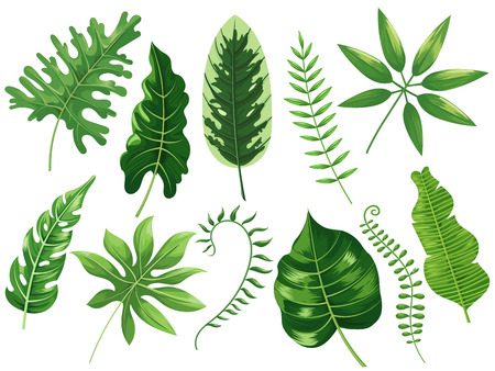 Tropical leaves. Exotic tropic leaf, botanic rainforest and tropics travel leafs painting. Botanical plants ficus, philodendron green leaf. Cartoon vector isolated illustration icons set