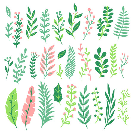 Decor leaves. Green plant leaf, ferns greenery and floral natural fern leaves. Vintage decorative monstera and palm foliage leaf. Plant ornament isolated vector icons set