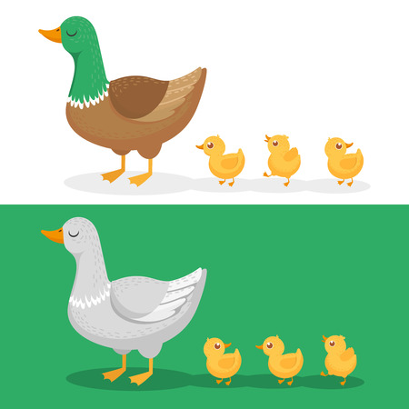 Ducklings and mother duck. Ducks family, duckling following mom and walking mallard baby chicks group. Wild goose family, farm bird with chick cartoon vector illustration set