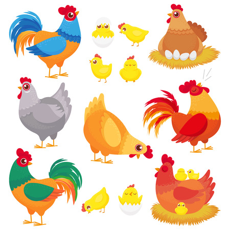 Cute domestic chicken. Farm breeding hen, poultry rooster and chickens with chick. Hens, domestic roosters and broilers chicks. Easter birds in nest cartoon vector isolated icons set
