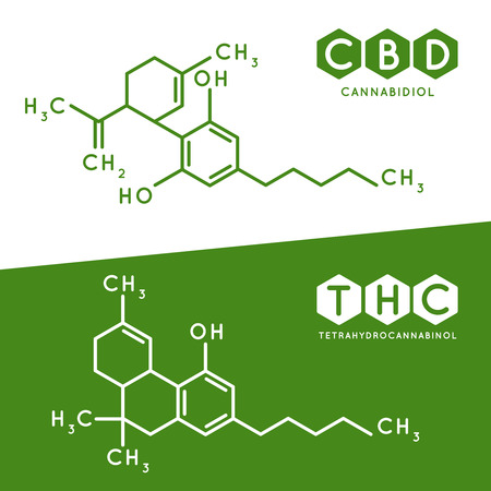 Thc and cbd formula. Cannabidiol and tetrahydrocannabinol molecule structure compound. Medical marijuana molecules, cannabidiol biochemistry formula. Chemistry addiction vector illustration  イラスト・ベクター素材