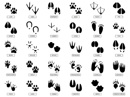 동물 발자국. 동물의 발 실루엣, 개구리 발자국 및 애완 동물의 발 실루엣이 인쇄됩니다. 야생 아프리카 동물은 워킹 트랙이나 발자국 트랙을 발로 밟습니다. 벡터 일러스트 레이 션 고립 된 기호 세트