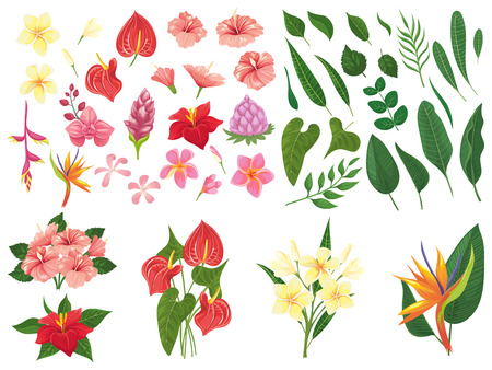 Tropical flower. Tropic forest flowers, exotic tropics plants leaves and flowering branch. Heliconia leafs, bali forest flower or hawaii flora. Vector illustration isolated symbols set Stock Illustratie