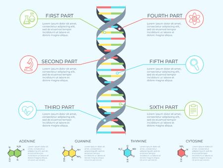 Infografía de ADN. Espiral genética, diagrama de molécula modelo genómico y diagrama de estructura de patrón adn. Medicina arn molecular, infografías de cromosomas o ilustración de concepto de vector científico de gen de adn Ilustración de vector