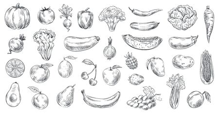 Naszkicowane warzywa i owoce. Ręcznie rysowane żywności ekologicznej, grawerowanie szkic warzyw i owoców. Zdrowe świeże wegetariańskie lub wegańskie jedzenie doodle. Wektor ilustracja na białym tle zestaw symboli
