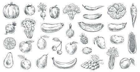 Verduras y frutas bosquejadas. Alimentos orgánicos dibujados a mano, grabado boceto de frutas y verduras. Doodle de alimentos vegetarianos o veganos frescos saludables. Conjunto de símbolos aislados de ilustración vectorial