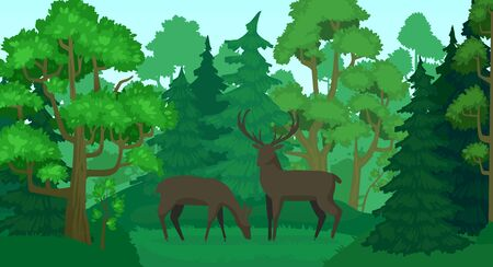 Cartoon deer in forest landscape. Deers in woods, forest field and green trees. Wildlife animals, doe and deer wood scenery or standing elks mammals forests scene vector illustration Ilustração