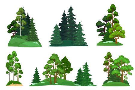 Alberi della foresta. Abete verde, composizione di pini forestali e alberi isolati. Boschi botanici forestali o segni di tronco d'albero verde del parco. Set di icone di illustrazione vettoriale dei cartoni animati