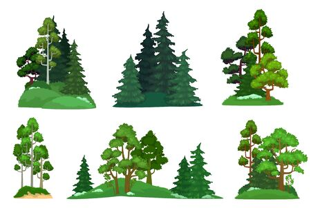 Forest trees. Green fir tree, forests pine composition and isolated trees. Foresting botanical woodland or park green tree trunk signs. Cartoon vector illustration icons set
