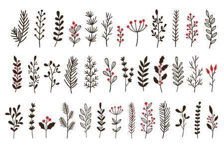 Hand drawn winter leaves and branches. Floral twig, botanical branch with berry and leaf doodle. Plant leaf feather and fir tree branches christmas holiday element. Isolated vector icons set