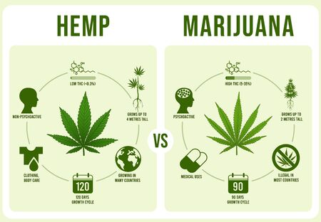 Hemp vs Marijuana infographics. Cannabis leaf, low and hight THC vector illustration. Modern banner or poster template with comparison of legal and illegal plant cultivars. Weed types distinction. 矢量图像