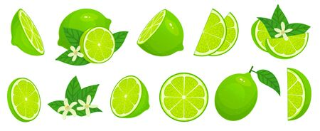 Cartoon lime. Limes slices, green citrus fruit with leaves and lime blossom isolated vector illustration set. Lime citrus fruit, green and juicy, juice vitamin organic Stock Illustratie