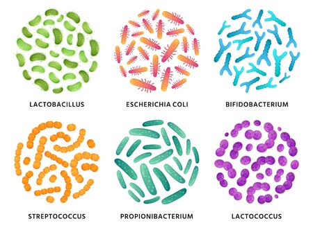 Probiotics. Lactobacillus, bifidobacterium and lactococcus probiotic bacteria in circle. Good bacterias vector illustration set. Bacteria and bifidobacterium, lactobacillus and probiotic