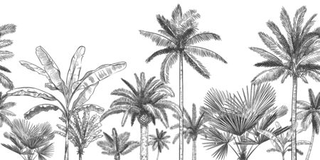 Seamless horizontal tropical background. Hand drawn palm trees, sketch exotic tropic jungle leaves and paradise palm tree vector wallpaper illustration. Exotic palm tree botanical, rainforest foliage Stock Illustratie